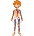 Circulatory system in human boy vector image vector image