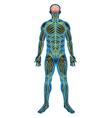 Human nervous system vector image