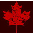 Maple leaf grunge vector image