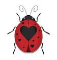 heart ladybug vector image