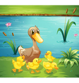 A mother duck with her ducklings in the river vector image