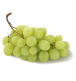 grapes vector image