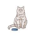 cute white cat pet animal sitting near bowl hand vector image