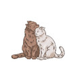 cute two hugging cats pet animals hand drawn vector image