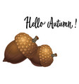 two acorns isolated on white background vector image