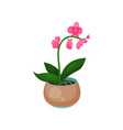 orchid phalaenopsis houseplant potted flower vector image