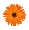 Bright spring flower vector image
