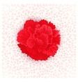 flower of Carnation vector image