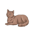 cute brown cat pet animal lying on the floor hand vector image