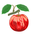 Red apple with green leaves vector image