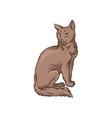 cute brown cat pet animal hand drawn vector image