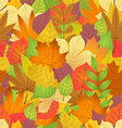 seamless with autumn leaves on white background vector image