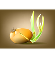 Bulb onion vector image