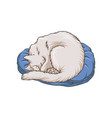 cute white cat pet animal sleeping on carpet rug vector image