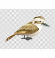 Kookaburra bird on transparent background vector image