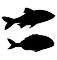 fish on white background vector image