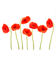 Nature background with red poppies vector image