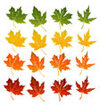Maple Leaves icon set vector image