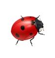 Realistic shiny ladybug vector image
