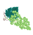 Grapevine background vector image