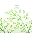 green leaves floral decoration nature vector image