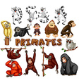 Different kind of primates vector image