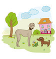 dogs on the lawn next to the house and the tree vector image