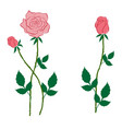 pink rose and buds in the style of flat vector image