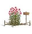 Blooming flowers in the ground fence and sign vector image