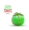 Green Tomato isolated on white Background vector image