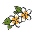 aromatic vanilla flowers with green leaves vector image