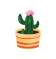 flowering cactus green potted plant vector image