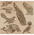 birds - an hand drawn pack line art vector image