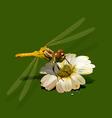 dragonfly on white flower vector image