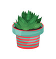 aloe houseplant potted plant vector image