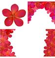 Pink Frangipani Set For Design vector image