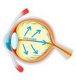 Eyes disease in closer look vector image
