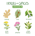 Herbs and spices collection 10 vector image