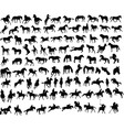 100 horses vector image vector image
