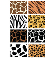animal print patterns vector image