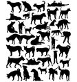 Street dogs vector image
