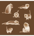 Set of siamese cats vector image
