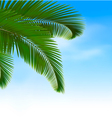 Palm leaves on blue background Summer holidays vector image vector image