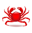 Crab isolated on white vector image