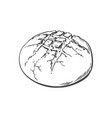 sketch round bread isolated vector image