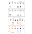 Set of 8 Step in Qualitative Research Process vector image