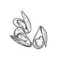 sketch cartoon sea mussel isolated vector image
