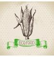 Hand drawn sketch corn vegetable Eco food vector image