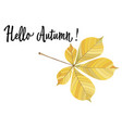 autumn yellow leaf of a chestnut isolated vector image