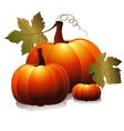 three pumpkin vector image